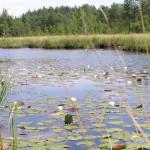 Поліський природний заповідник