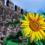Грузия. Гонио-Апсаросская крепость