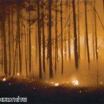 Полесский заповедник. Лесные пожары