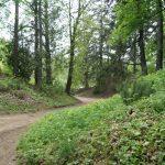 «Тростянець»: рослинний скарб Скоропадських