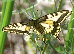 Голосіївський національний природний парк