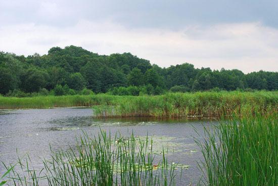 Голосіївський національний природний парк. Озеро Шапарня