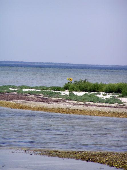 Чорноморський біосферний заповідник
