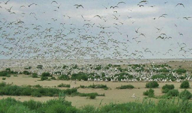 Дунайський біосферний заповідник. Птахи
