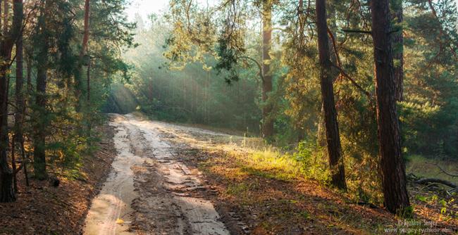 НПП Слобожанський. Сосновий ліс