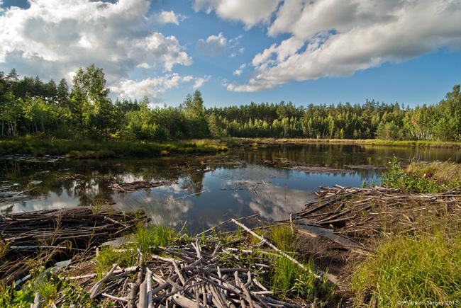 НПП Слобожанський. Лісове озеро
